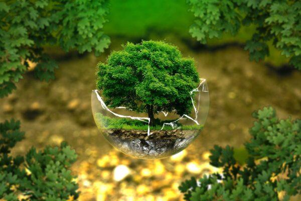 Du kan gøre en forskel for miljøet med grøn omstilling i hjemmet